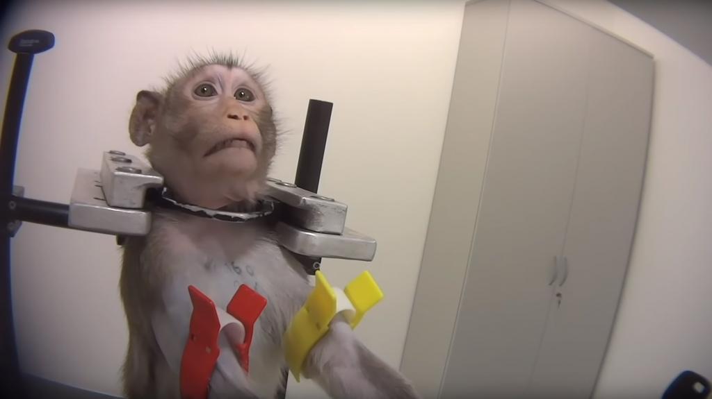 monkey subject at LPT Hamburg