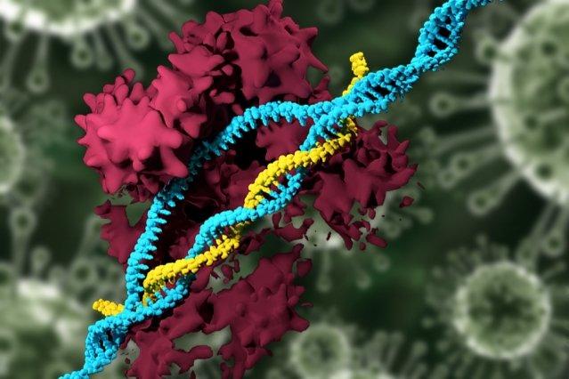 CRISPR Enzyme on DNA