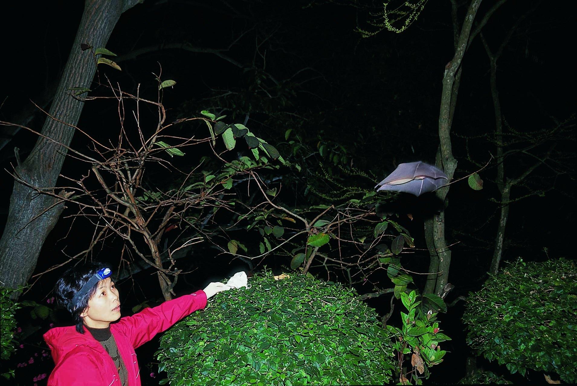 Shi Zheng-Li releases a bat